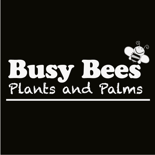 Busy Bees Plants and Palms